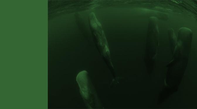 El sueño vertical de las ballenas